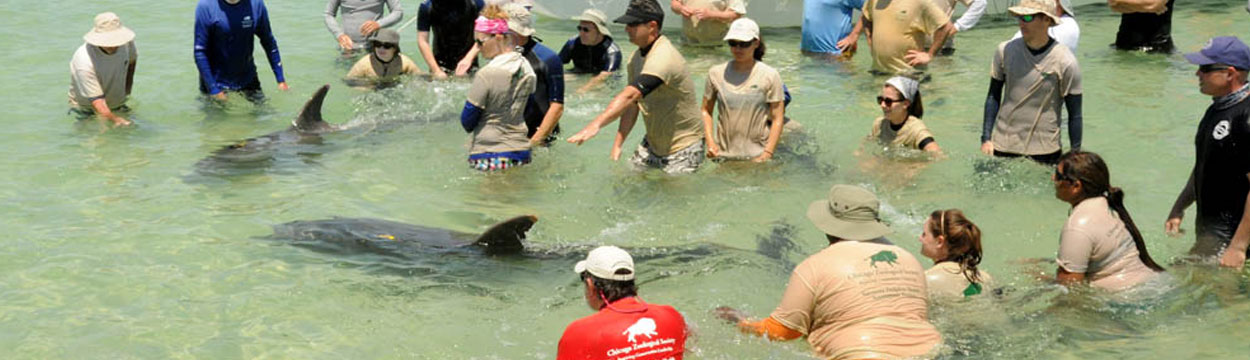 Sarasota Dolphin Research Program