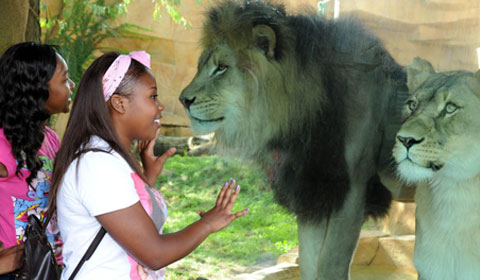 Chicago Zoological Society National Inclusion Project