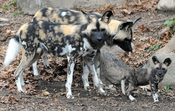 Pictures Of Painted Dog Houses