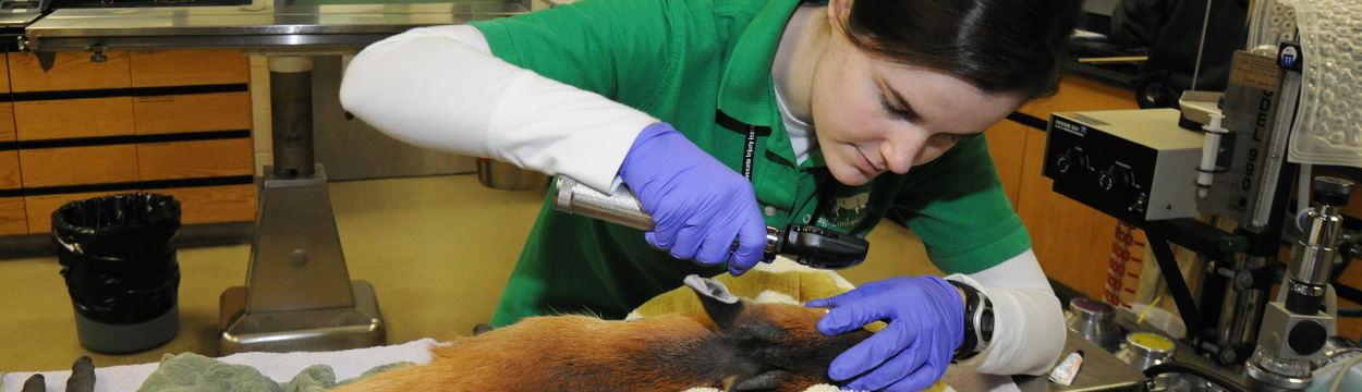 Animal Residency Program