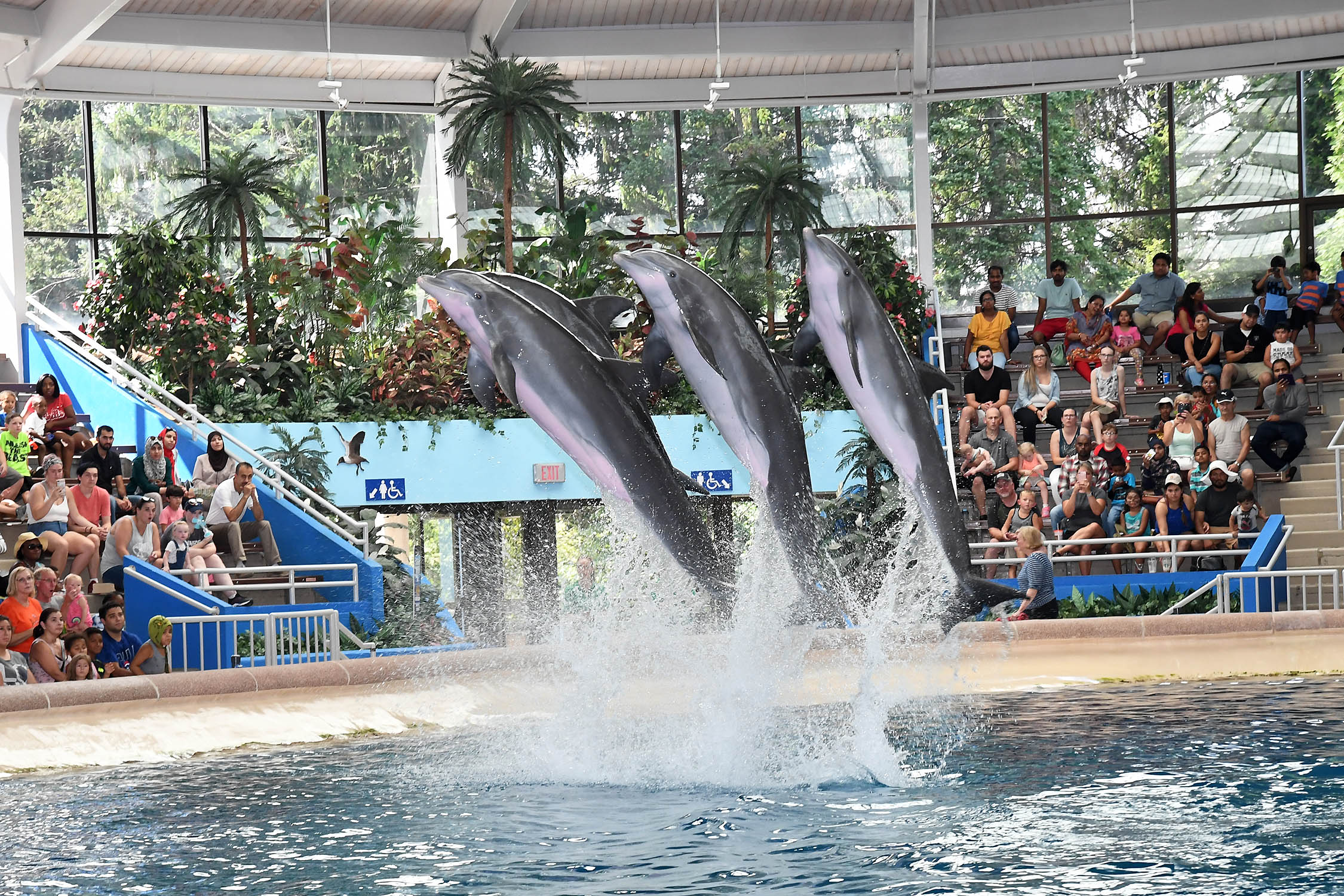 DSC_4649-Dolphins-in-Action.jpg