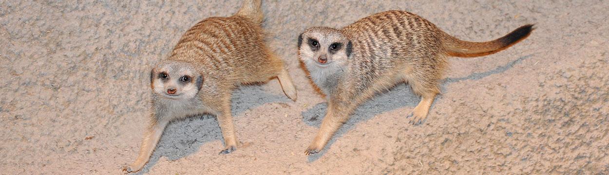 Chicago Zoological Society - Desert's Edge