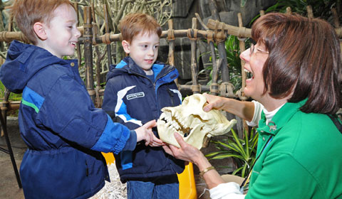 Volunteer at Brookfield Zoo