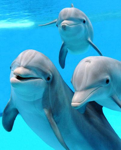 Dolphins_402x500.jpg.aspx?profile=RESIZE_710x