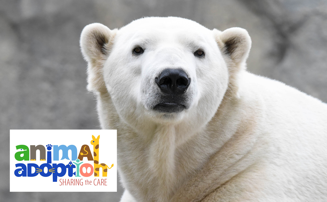 Animal Adoption Hudson Polar Bear