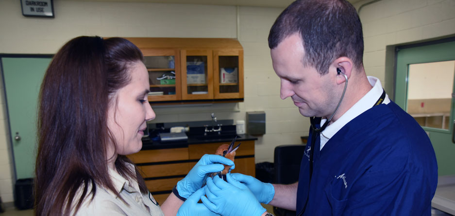 Veterinary exam of Micronesian kingfisher at Brookfield Zoo