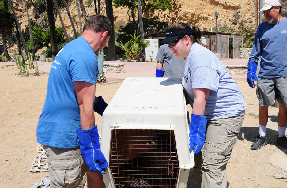 Sea lion pup rescue