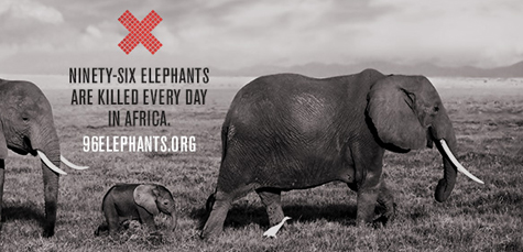 96elephants.org