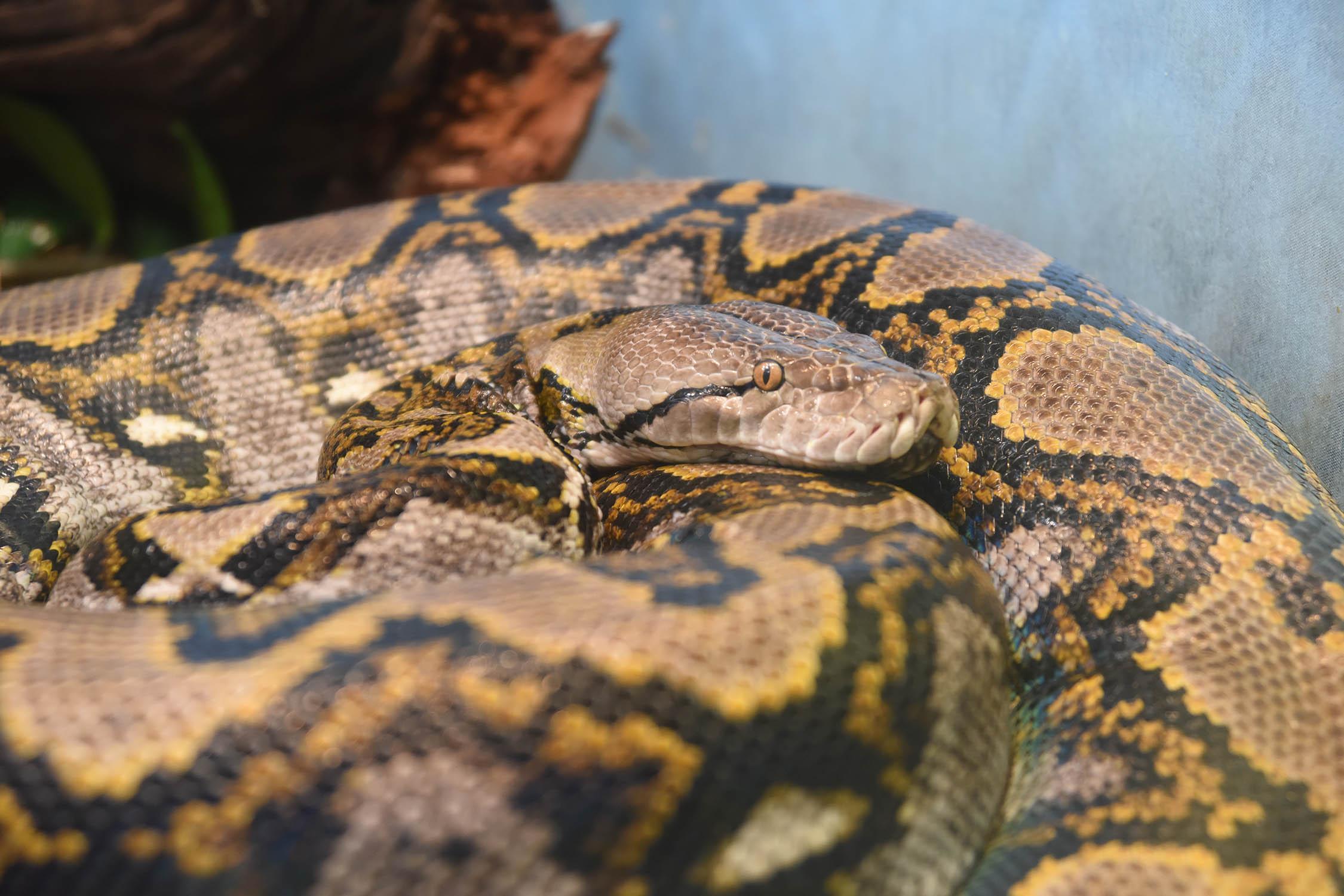 Chicago Zoological Society Celebrate World Snake Day At
