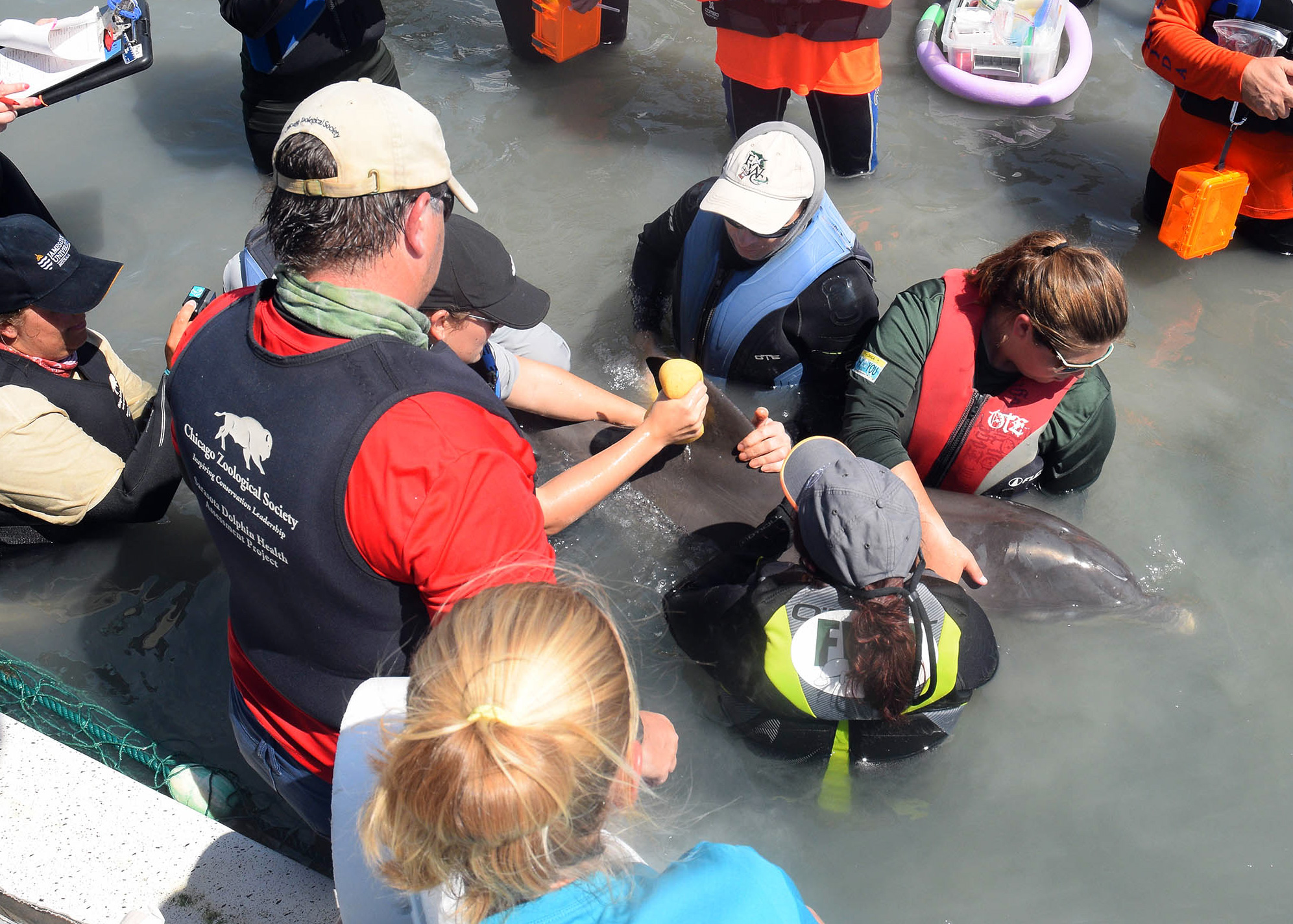 Dolphin Entanglement Rescue in West Florida